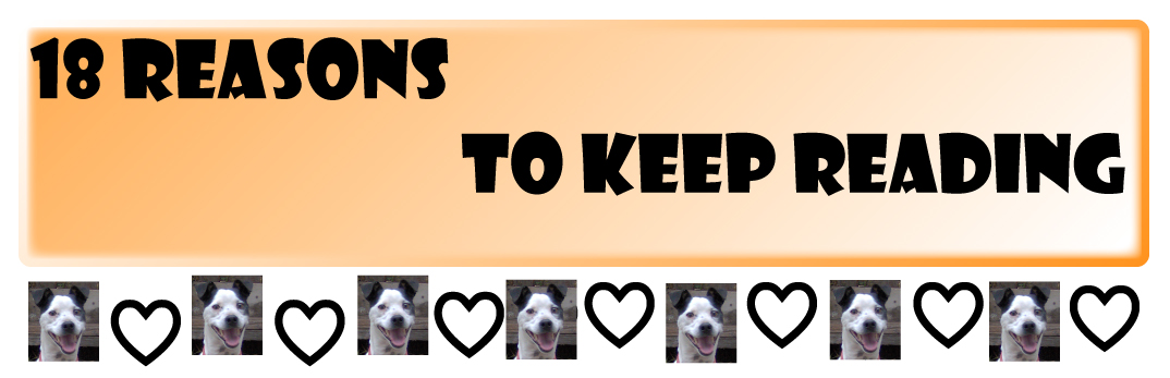 18_Reasons_To_Keep_Readig_Jack_Russell_Terrier