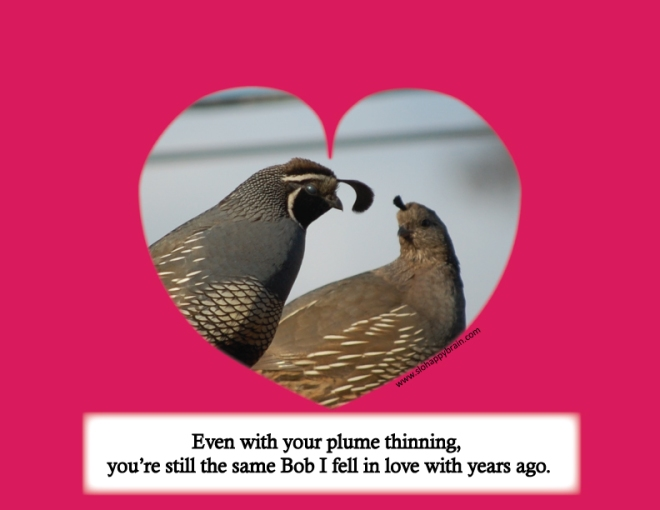 California_quail_plume_love_cartoon