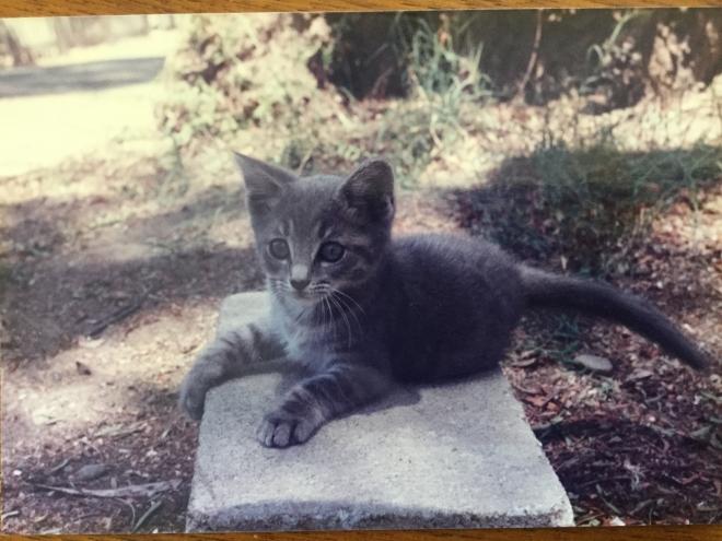 Tina_C_Davidson_pet_Cat_Ziggy